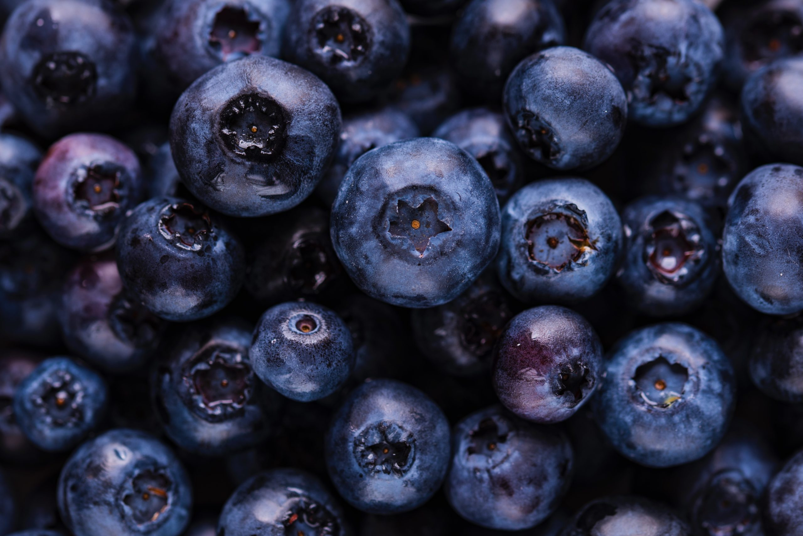 Blueberry For Health Benefits Turns Very Powerful