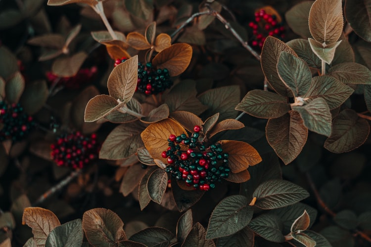 Know About Wild Berries That Are Good For Health